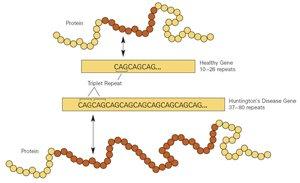 Цепочки генов