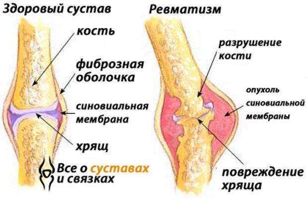 лекарство от глистов для собак азинокс
