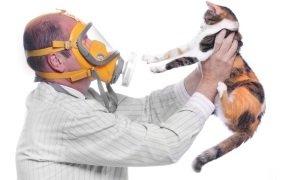 аллергия на кошку