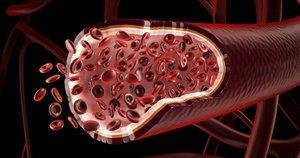 Кровеносный сосуд на срезе