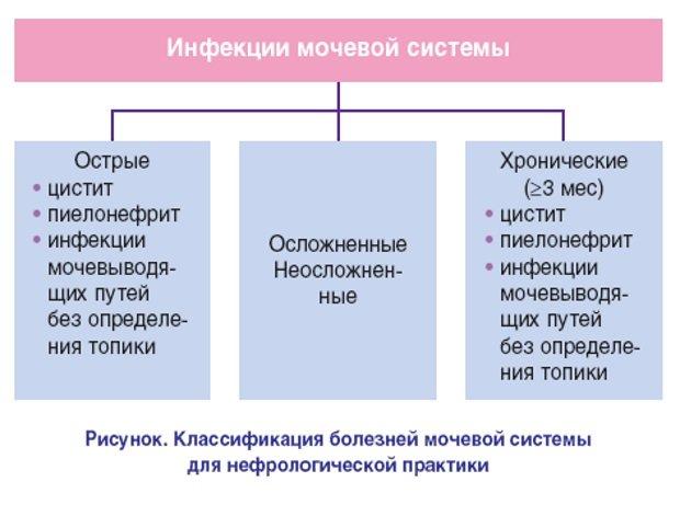 инфекции мочевой систем