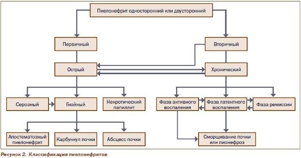Классификация воспаления почек