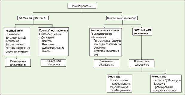Тромбоцитопения: причины и лечение, аутоиммунная, иммунная