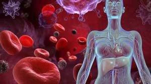 Эритроциты и сосуды