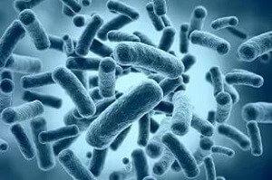 бактерии диареи