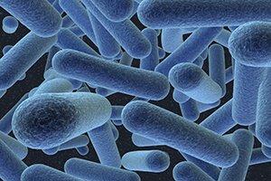 Бактерии дисбактериоза