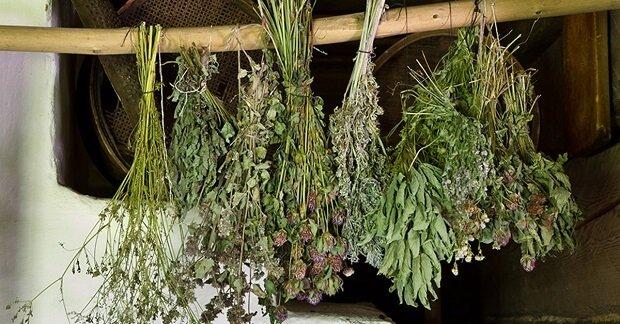 Методика засушки растения