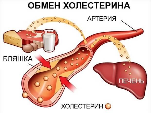Холестериновый обмен