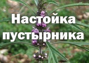 Растение пустырник