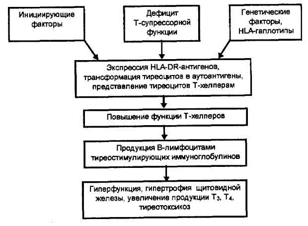 Схема течения базедовой болезни