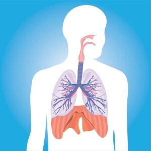 Исследование дыхательной системы