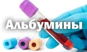 Альбумины в крови