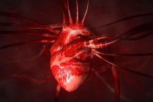 Сердце в системе органов