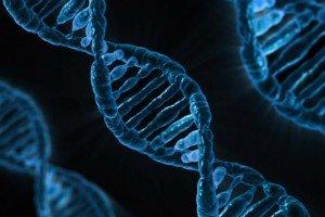 Предрасположенность на генетическом уровне