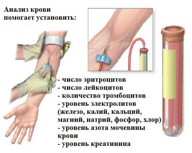 что показывает анализ крови
