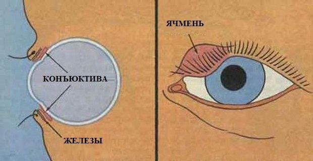 Мазь для глаз: от воспаления и покраснения, гепариновая, тетрациклиновая