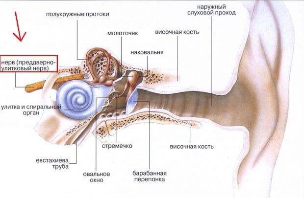 Преддверно-улитковый нерв