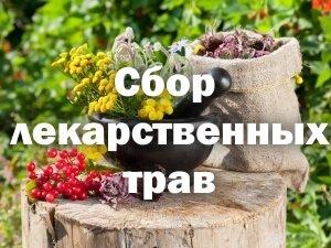 Собранные растения