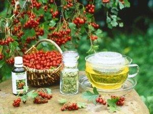 Заготовление ягод