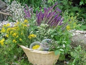 Растения в корзине