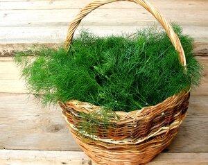 Зеленый укроп