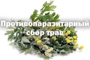 Сушеные растения