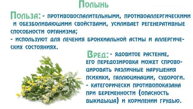сбор трав от паразитов купить в аптеке