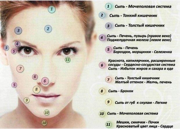 Проекция внутренних органов