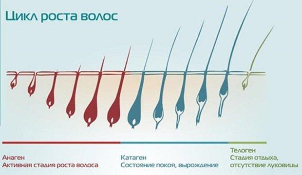 Цикл роста волоса