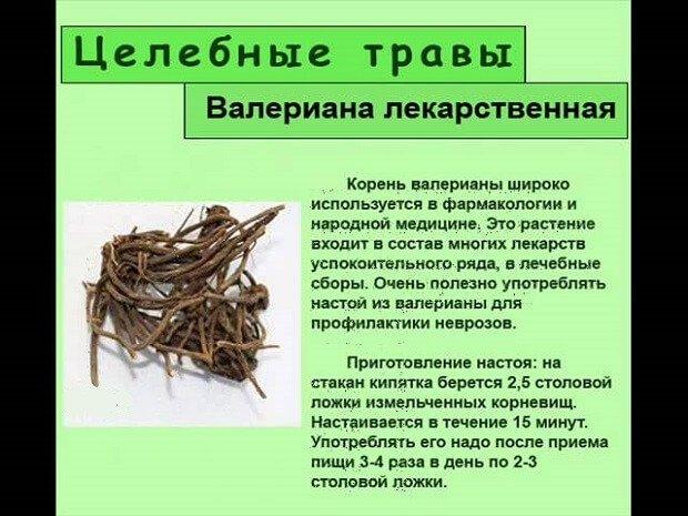Рецепт настоя корневищ