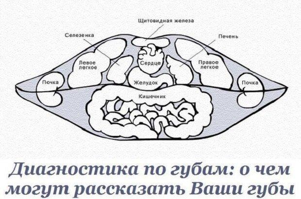 Проекция органов
