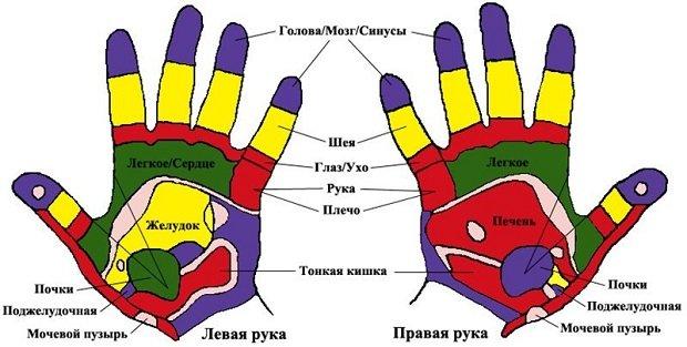 руки и органы