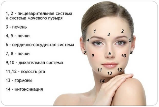 Зоны внутренних органов