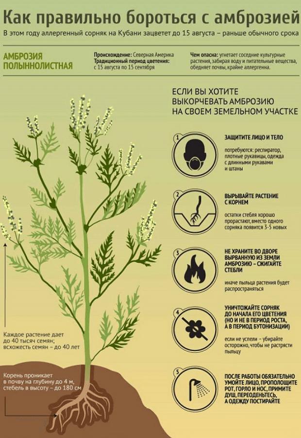 Борьба с растением
