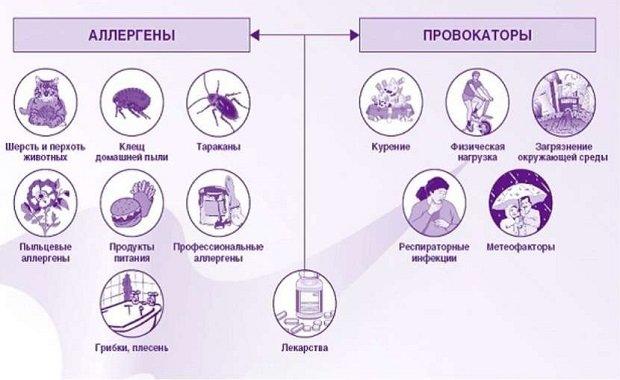 Основные аллергены и провокаторы