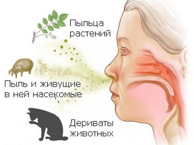 Воздействие аллергенов на человека
