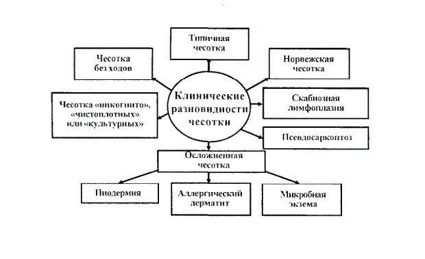 Основные виды чесотки