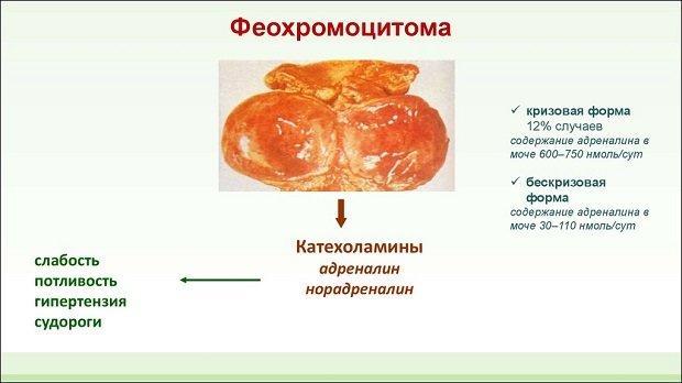Действие катехоламинов