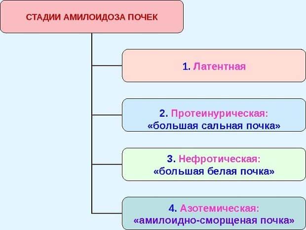 Стадии амилоидоза
