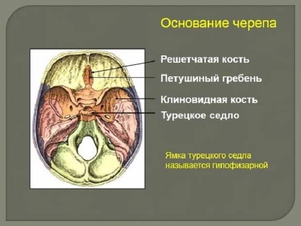 Основание черепа