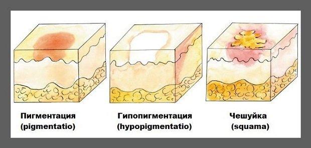 Вторичные кожные элементы