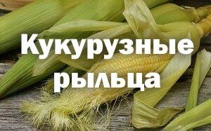 Кукурузные рыльца - лечебные свойства и противопоказания