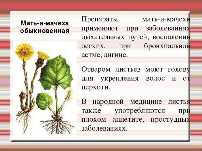 Лечение болезней растением