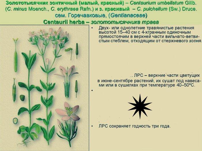Способы сушки растения