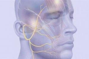 Нерв на лице человека