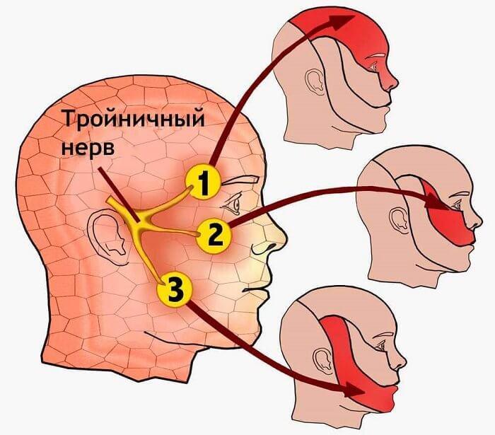 Вид тройничного нерва