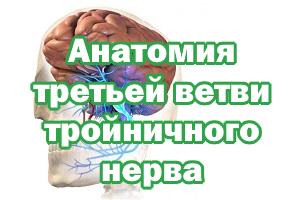 Анатомия 3 ветви тройничного нерва