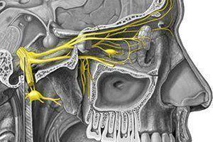 Расположение нервов на лице