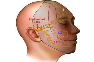 Местоположение тройничного нерва